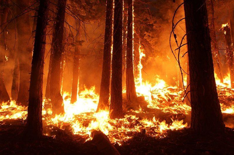 hutan terbakar
