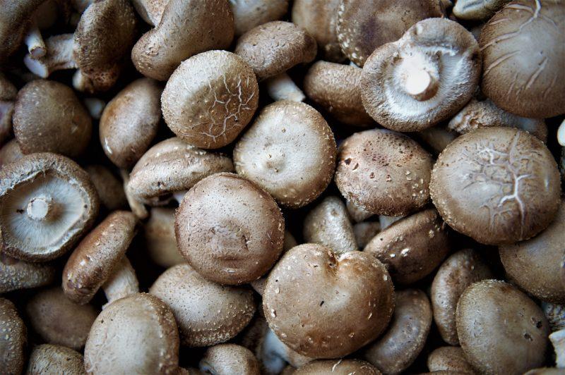 harga jamur merang